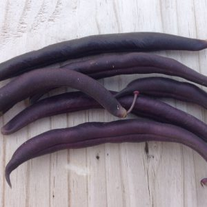 Royal-Burgundy-Purple-Beans.jpg