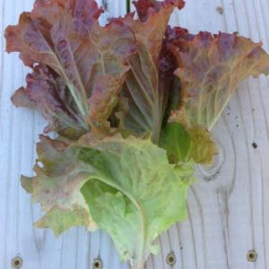 Ruby-Red-Lettuce-Seeds.jpg