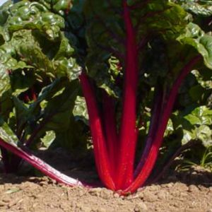 Ruby_Red_Swiss_Chard.jpg