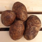 Russett-Seed-Potatoes.jpg