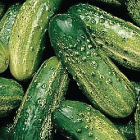 SMR-58-Cucumbers-and-Seeds.jpg