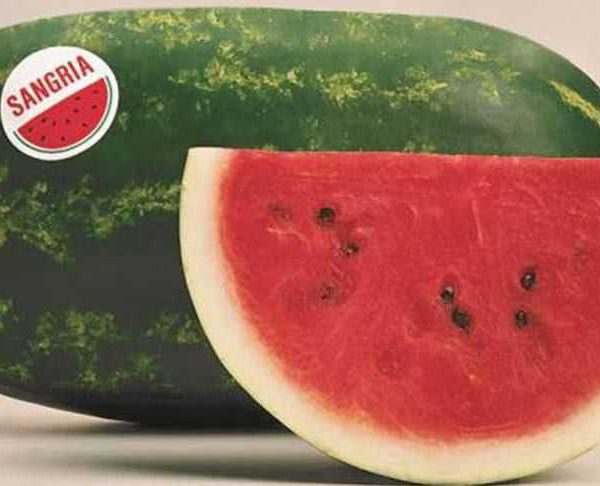 Watermelon Varieties With Pictures