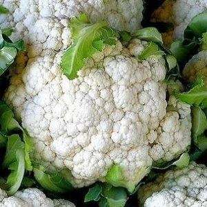 self_blanching_cauliflower