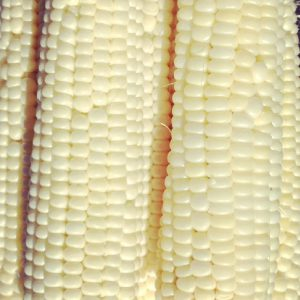 Silver-King-Corn-Seeds.jpg