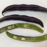 Sliced-Royal-Burgundy-Bush-Bean.jpg