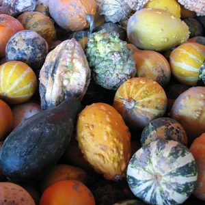 Small_Gourds.jpg