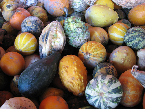 small-mix-gourd-seeds