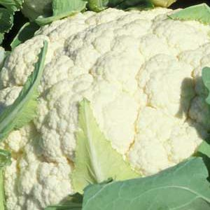 snowball_cauliflower