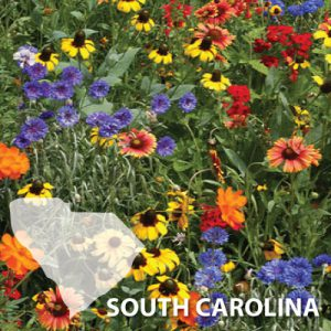 South-Carolina-Wildflower-Seeds.jpg
