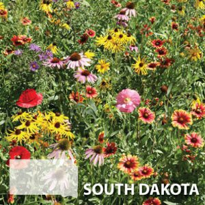 South-Dakota-Wildflower-Seed.jpg