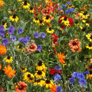 Southeast_Wildflower_Seed_Mix.jpg