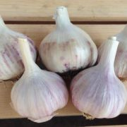 Spanish-Roja-Garlic.jpg