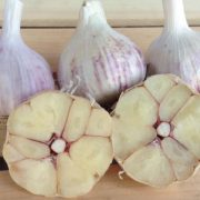Spanish-Roja-Garlic-Bulbs.jpg