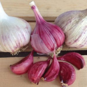 Spanish-Roja-Garlic-Cloves.jpg