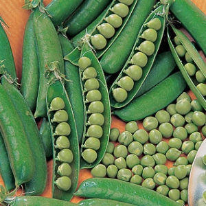 Spring Pea Seeds