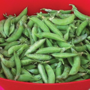 sugar-ann-pea-seeds
