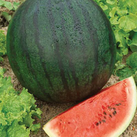 Sugar-Baby-Watermelon-and-Seeds.jpg