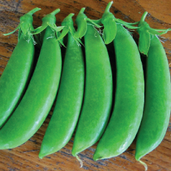 Sugar-Snap-Pea-Seeds.jpg