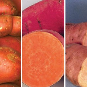 Sweet-Potato-Mix.jpg