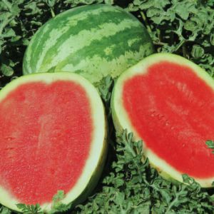 Sweet-Trip-Seedless-Watermelon.jpg