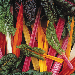 Swiss-Chard-Bright-Lights.jpg