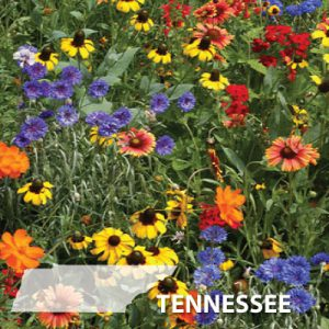 Tennessee-Wildflower-Seeds.jpg