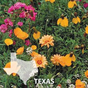 Texas-Wildflower-Seed.jpg