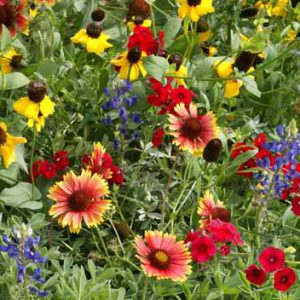 Texas_Wildflower_Seed_Mix.jpg