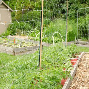Trellis Netting Vines