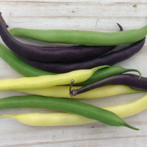 tricolor-bean-seed-mix