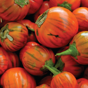 Turkish-Orange-Eggplant-Seeds.jpg