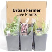Urban-Farmer-Plants-1.jpg