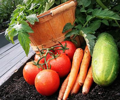 Garden Planting Guide. Vegetable Garden