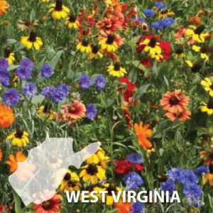West-Virginia-Wildflower-Seeds.jpg