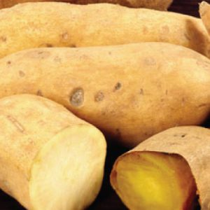 White-Yam-Potato-Slips.jpg