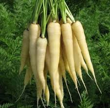 White_Carrot_Seeds.jpg