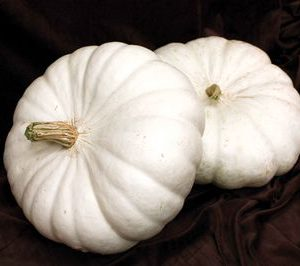 White_Flat_Boer_Ford_Pumpkin_Seeds.jpg