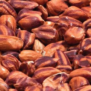 wild-jungle-nut-peanut-seeds