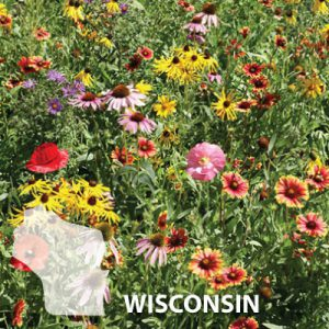 Wisconsin-Wildflower-Seed.jpg