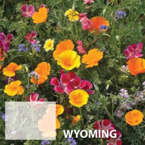 Wyoming-Wildflower-Seeds.jpg