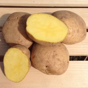 yellow-finn-seed-potato-cut