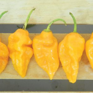 Yellow-Ghost-Pepper-Seeds.jpg