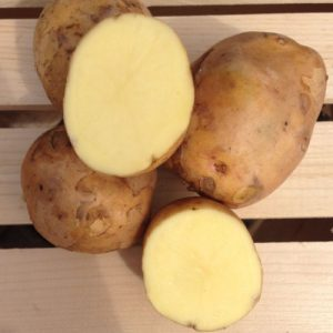 yukon-gold-seed-potato-cut