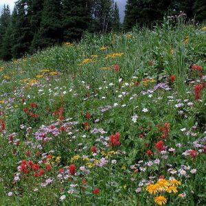 forest_wildflowers_susan_marsh_lg