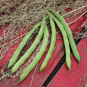 kentucky dreamer bean seeds